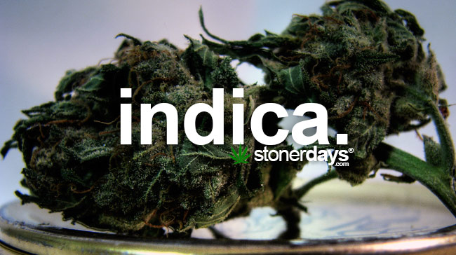 indica-marijuana-strain