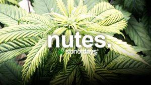 nutes-marijuana-nutrients