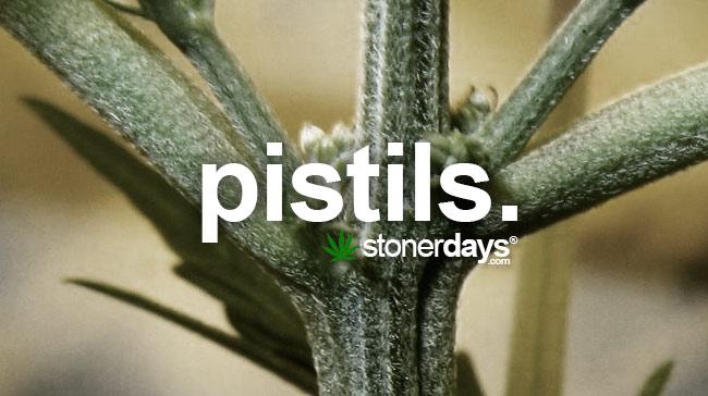 pistils-marijuana-slang