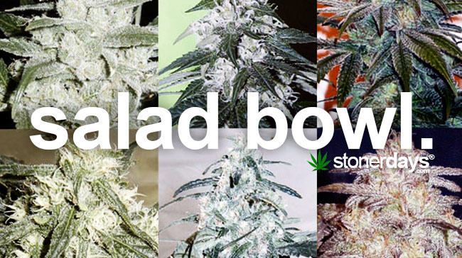salad-bowl-marijuana