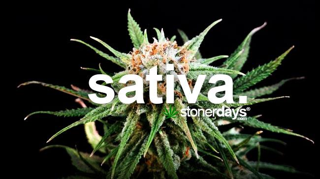 sativa-marijuana-strain