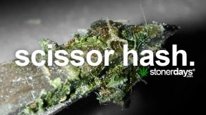 scissor-hash-marijuana