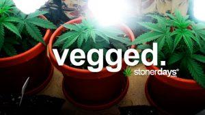 vegged-marijuana-term