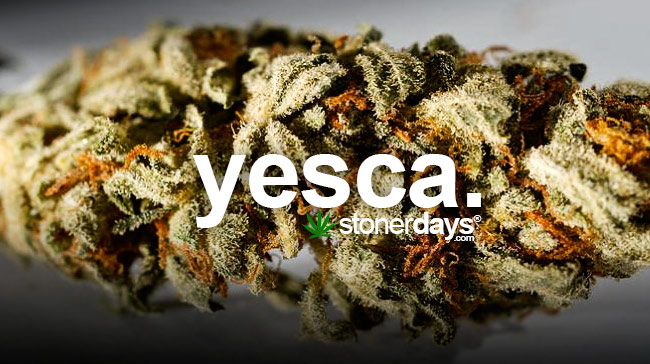 yesca-marijuana-slang