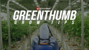 greenthumb-grow-tips