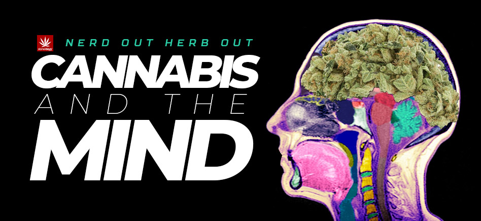 Nerd Out Herb Out; Cannabis And the Mind