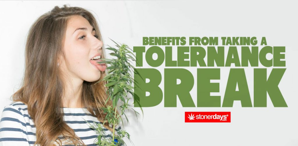 Benefits-From-Taking-A-Tolerance-Break