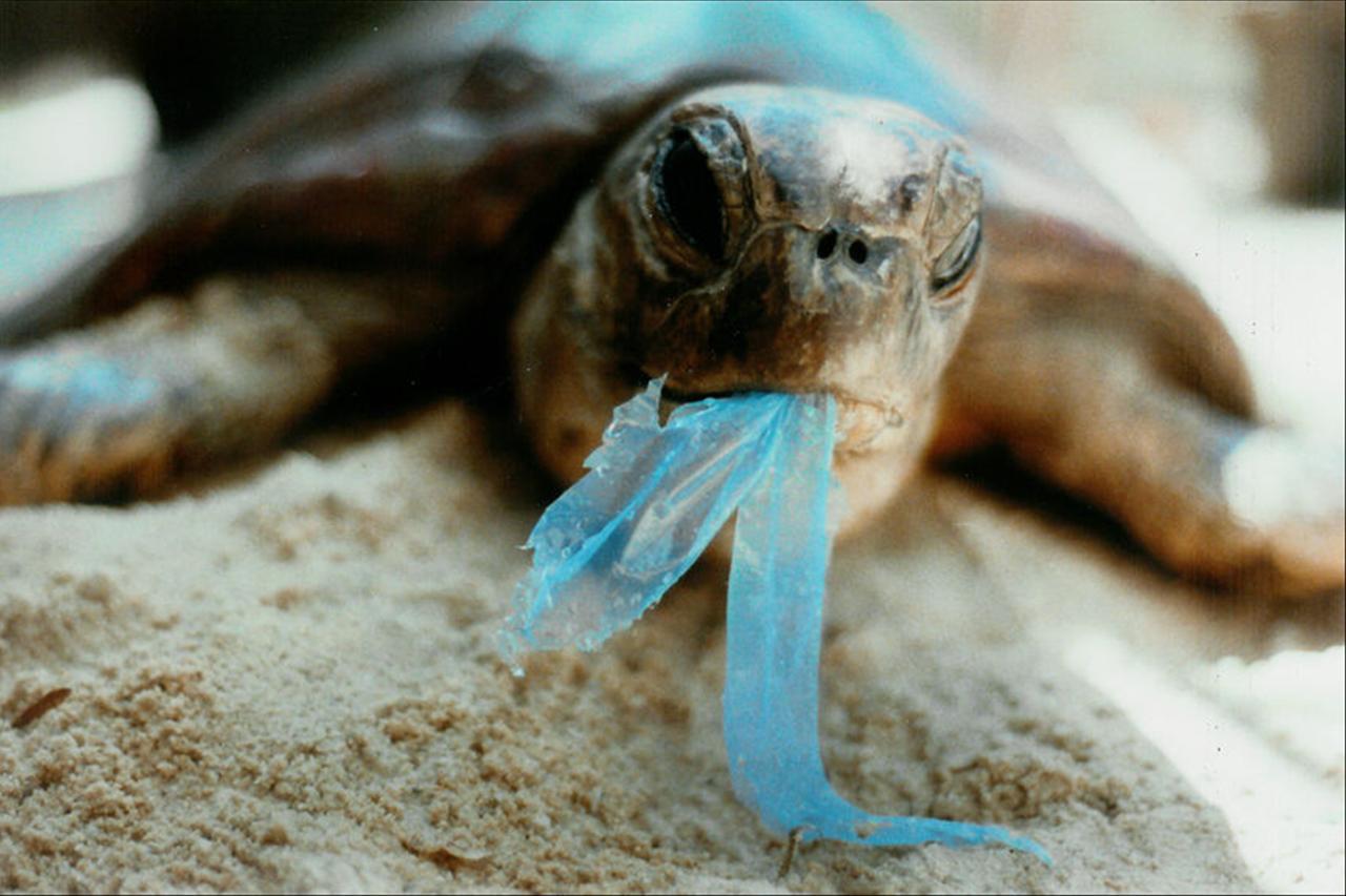 Turtle-eating-plastics