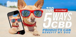 Top-5-Ways-CBD-Products-Can-Benefit-My-Dog
